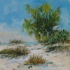 Florida Landscape Series