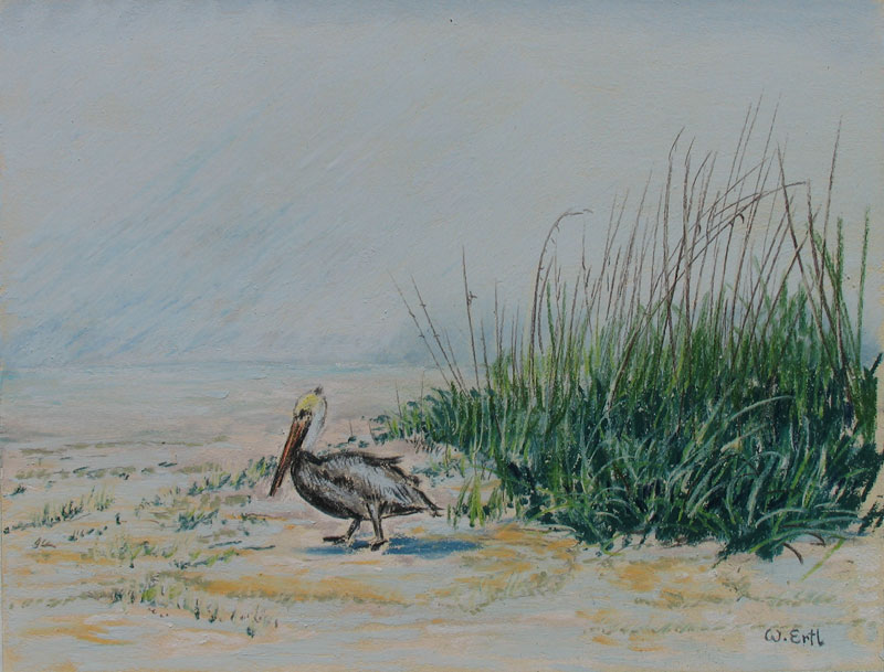 ertl-pelican-on-the-beach
