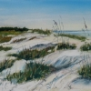 ertl-caladesi-island-dunes