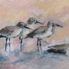 ertl-shore-birds